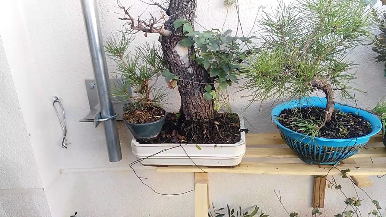Estanterias para bonsai explicaci n de como hacerlas de for Estanterias para bonsais