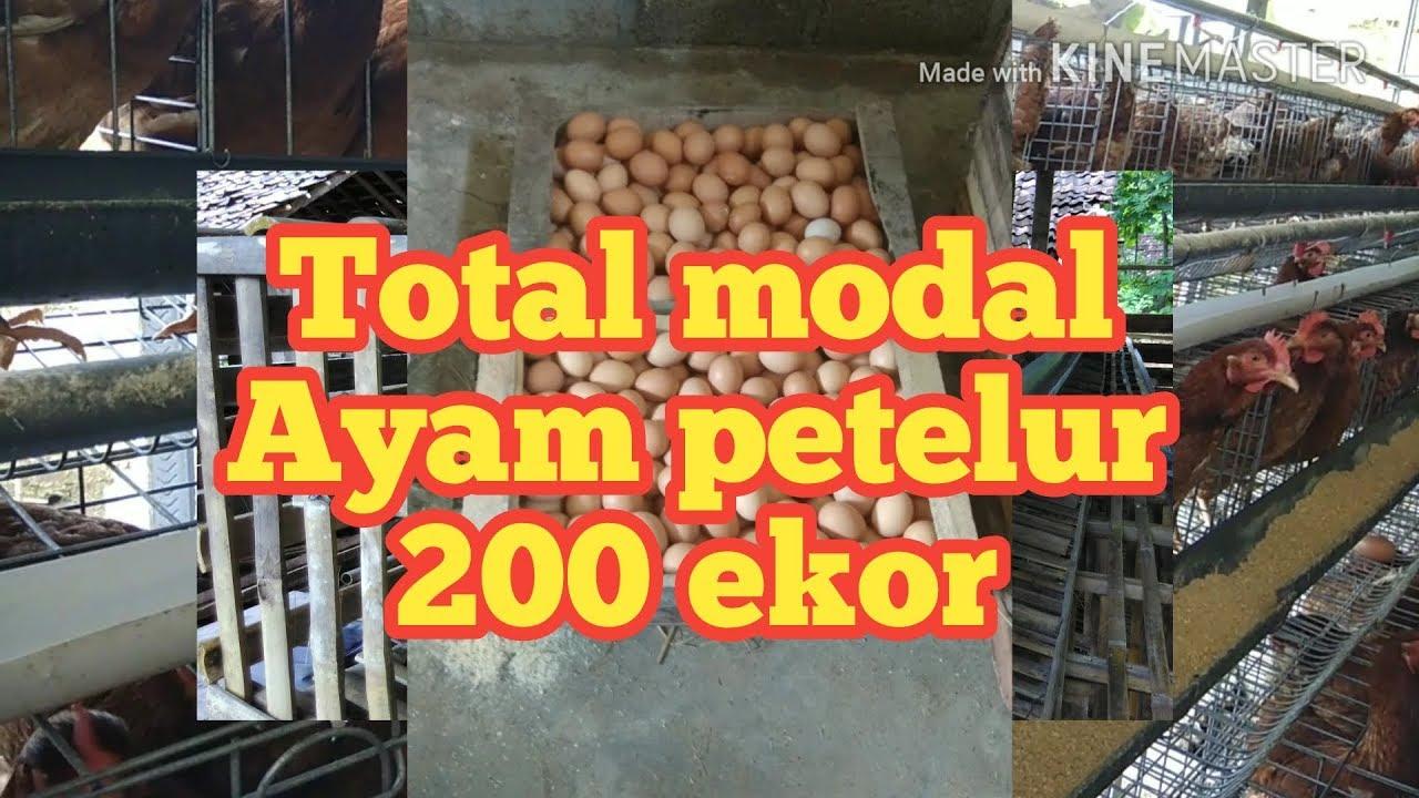 #2 Total Modal Usaha 200 ekor Ayam Petelur - YouTube