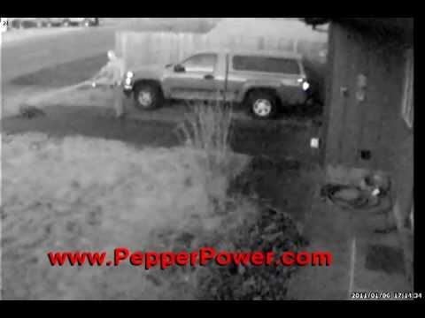 Aggressive Pitbull Dog Sprayed with UDAP Pepper Power Developed By A Grizzly Bear Attack Survivor