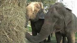 Bauern helfen Zirkuselefanten in Futternot