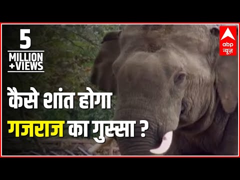 Jungle: The story of furious elephant and how was he captured