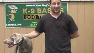 Steve Lento With His Dog Cosmo Giving A Testimnia For K9 Basics Dog Training!