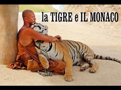 LA TIGRE E IL MONACO.  (documentario)