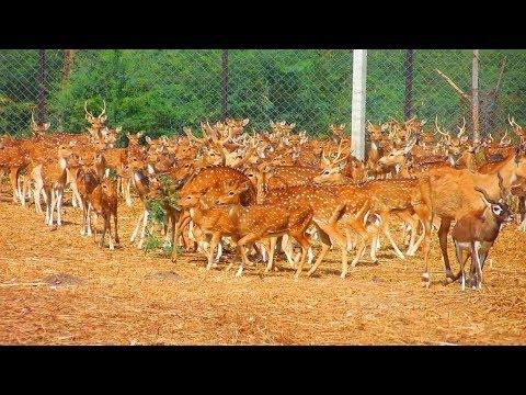 Deer Park in Karimnagar  - Telangana - ComeTube Video