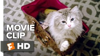 Video Nine Lives Movie CLIP - Who Needs a Litter Box? (2016) - Kevin Spacey Movie download MP3, 3GP, MP4, WEBM, AVI, FLV Januari 2018