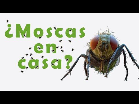 C mo ahuyentar las moscas de la casa funnycat tv - Como eliminar los mosquitos de mi casa ...