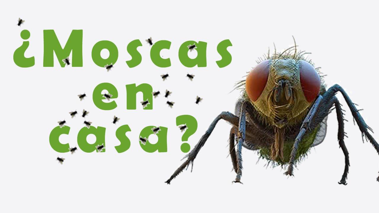 Trucos caseros para eliminar moscas en casa youtube - Como sacar las moscas de la casa ...