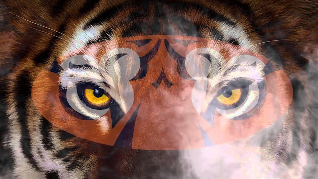 2014 Auburn Tiger Football