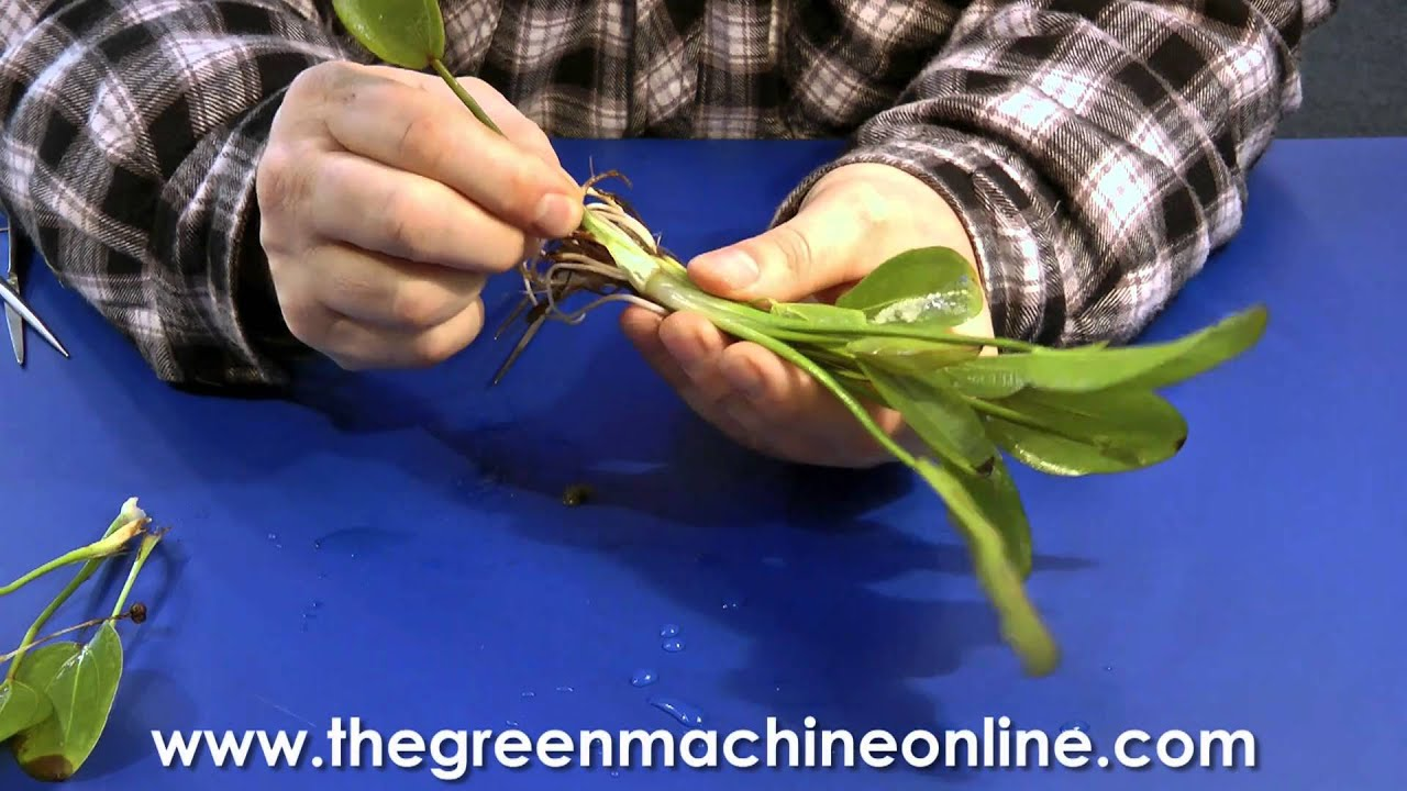 Tropica Plant Guide Pdf