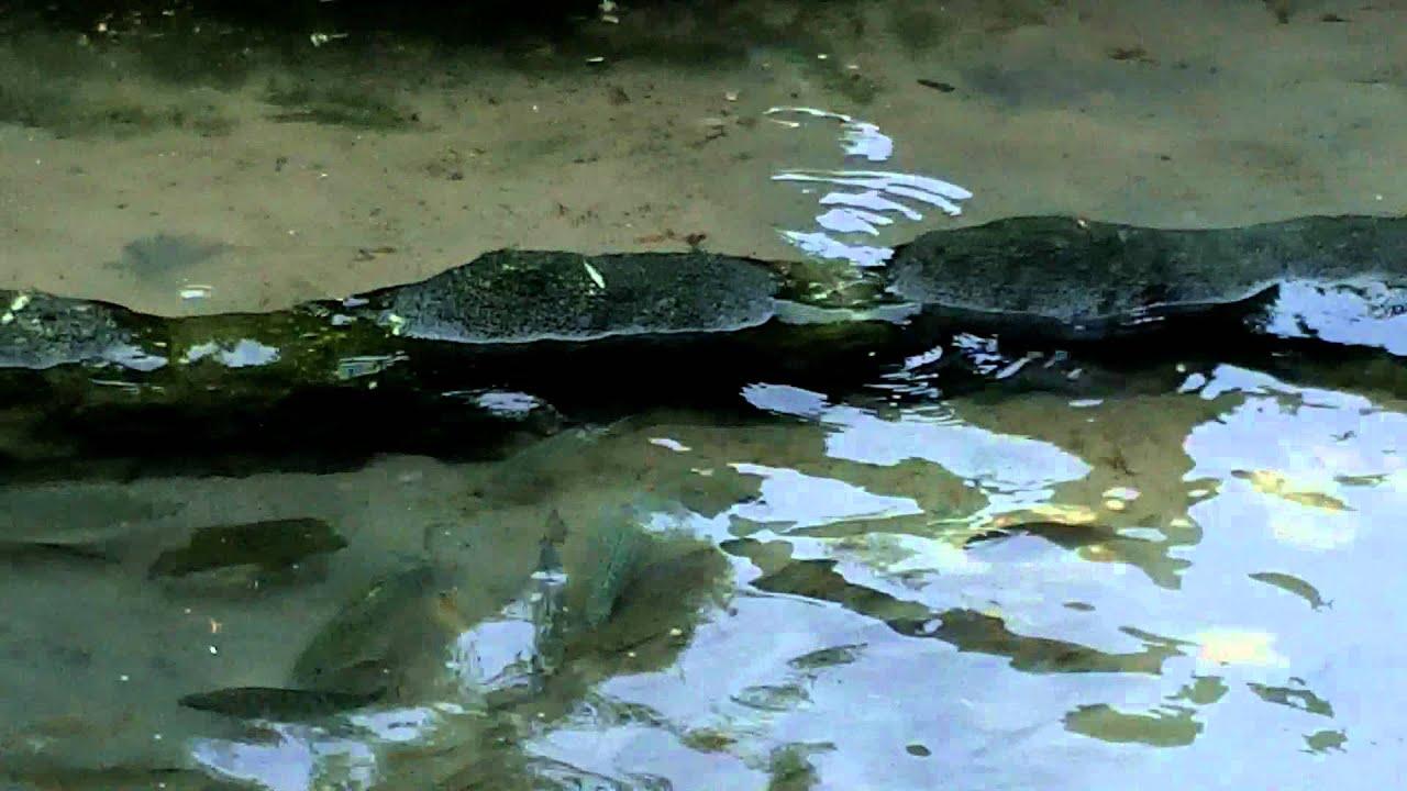 Fish tank kings a snorkelers dream - Draining The Snorkel Tank