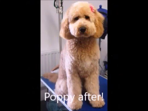 Welcome to woofly pawfect dog grooming youtube welcome to woofly pawfect dog grooming solutioingenieria Images