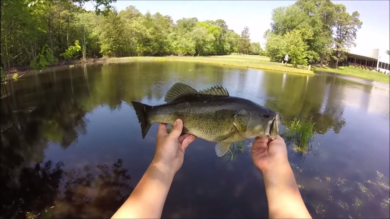 Topwater bass fishing with spooks youtube for Topwater bass fishing