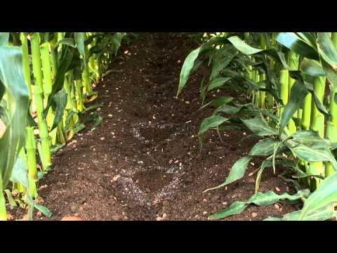 Large Scale Corn Production