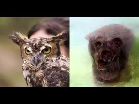 Deep image reconstruction: Natural images