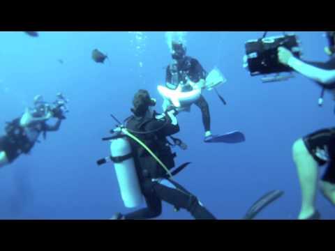 """A BAHIMIAN TING"" BY Carlos Estrabeau. (shark safety diver in Bahamas)"
