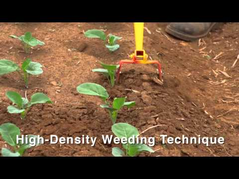 Introduction to Weed Management in a Small Scale Organic Production System HD