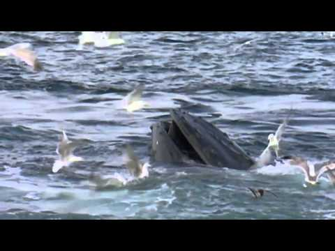 BBC Documentary 2014 Ocean Voyager Nature Documentary