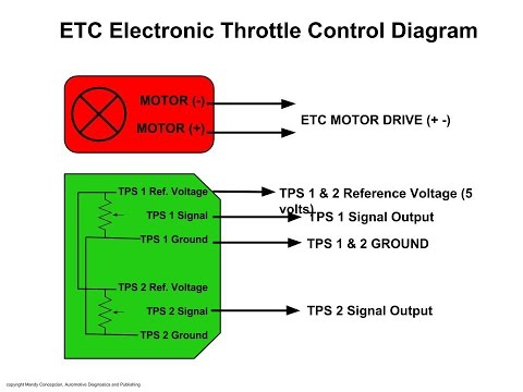 Electronic Throttle Motor Wires Identification - YouTube  YouTube
