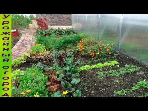 Как улучшить землю на даче простым способом