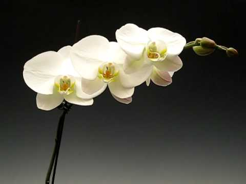 What Is An Orchid Youtube