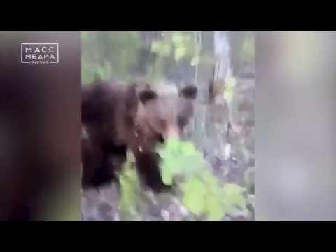 Мужчина сошелся в схватке с медведем | Новости сегодня | Происшествия | Масс Медиа
