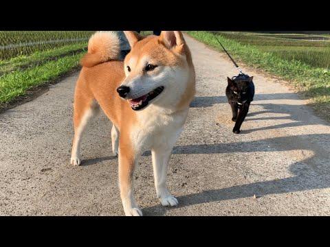 楽しいお散歩の帰りは車で爆睡だワン Take a nature walk with dog and cats