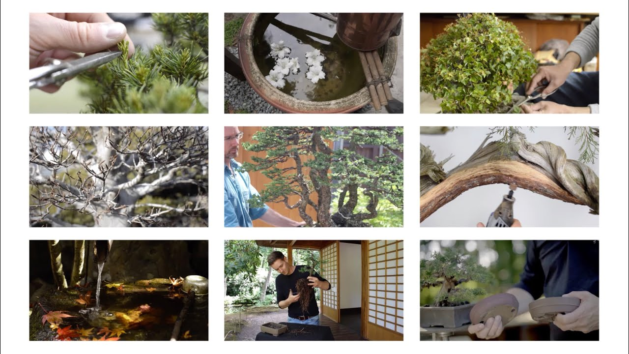 Online Bonsai Courses Youtube
