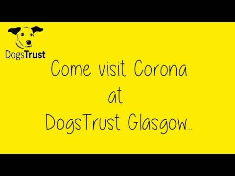 DogsTrust Glasgow - Corona