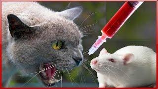 Играем в доктора с крыской Кошки - мышки Тайная жизнь домашних животных