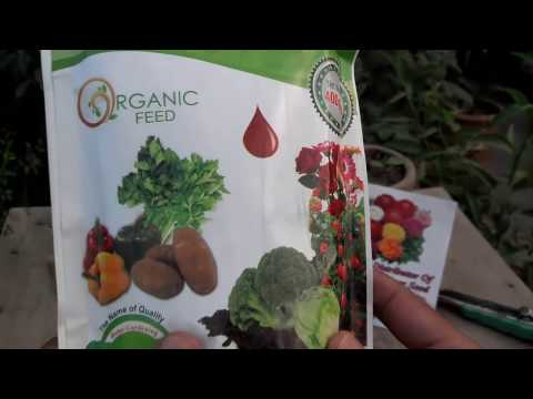 Organic Blood Meal Fertilizer | Organic Gardening Fertilizers | How to Add Nitrogen (Urdu/hindi)