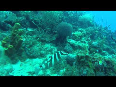 Guadeloupe Marine Life dec 2015