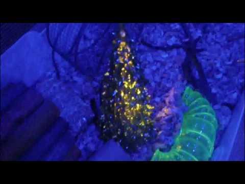 PALLET WOOD HAMSTER CAGE   LED LIGHTED!