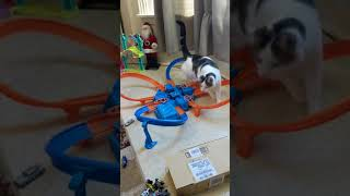 Cat overwhelmed by hot wheels - 981560 Mp3