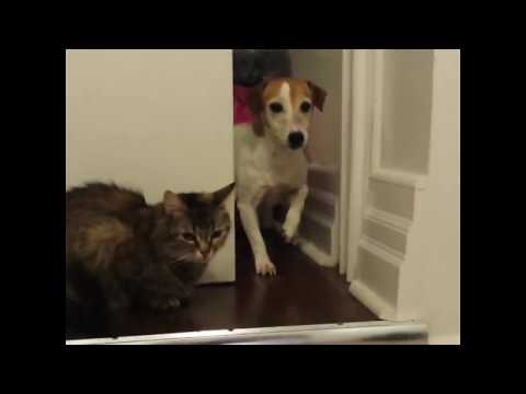 Cats and Dogs do the funniest things