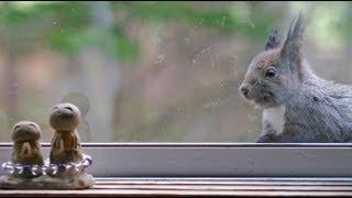 『窓際にやって来たエゾリス』 北海道 津別町 白いエゾリス 検索動画 22