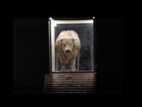 Moses und Aron  Philippe Jordan & Romeo Castellucci  Opéra de Paris  DVDBlu-ray trailer