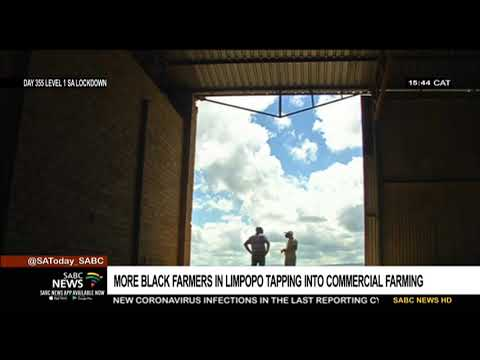 More black farmers in Limpopo tap into the commercial market