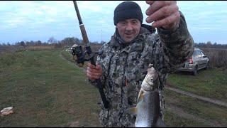 Рыбалка в ноябре Река Луга Сырть Нежданный гость