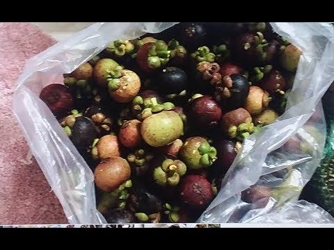Về quê vườn trái cây nhà Bà Dì Ngoại ở Long Khánh - New York