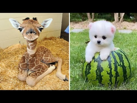 Baby Animals ? Funny Cats and Dogs Videos Compilation (2020) Perros y Gatos Recopilación #58