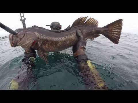 Spearfishing Monterey California w/ polespear 2017