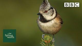 Spring wildlife webcams live! 🐤🦊🐿 - Wed 27 May - Springwatch - BBC