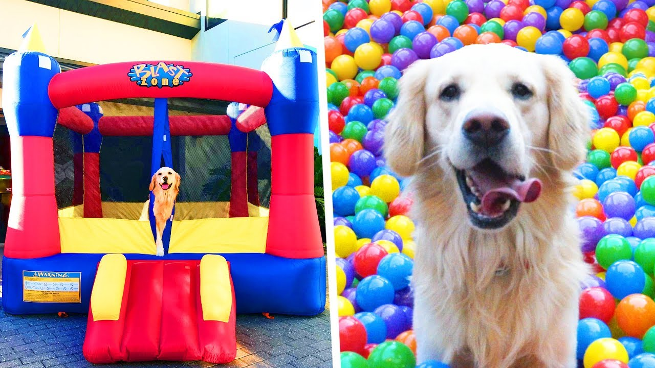 DOG GETS BOUNCE HOUSE FOR FOURTH BIRTHDAY - YouTube