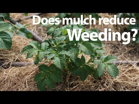 Does Mulch Reduce Weeding In The Garden And Save Time