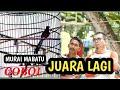 Murai Batu Ring Coboi Juara Lagi Di Kapolsek Banda Sakti Aceh  Mp3 - Mp4 Download