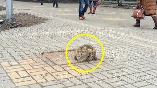 Вы не поверите, что сделал кот после того как его бросил владелец