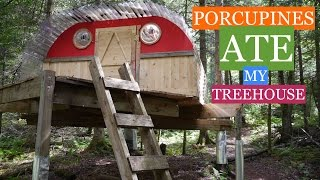 Porcupines Ate My Tree House/cabin In Vt! (with Tree Fort Tour)