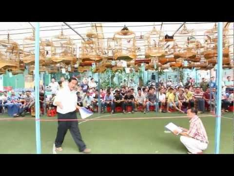 CLB Chim Hot Tan Mai, Hoi Thi Chim Chao Mao Hot Lan I (10-03-2013) B