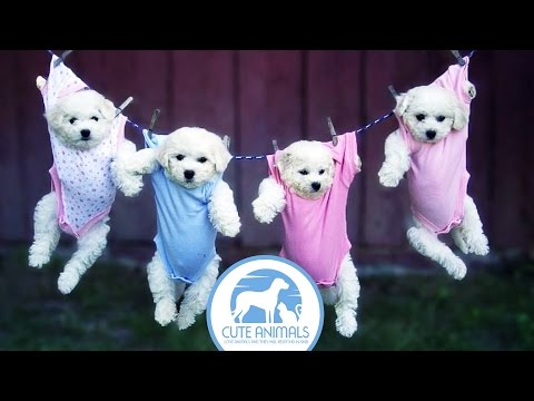 33 Photos Cute Puppies in a Charming Pajamas
