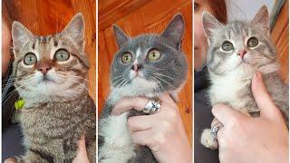 А у нас снова милые котятки! Давно не было котяток, да? В видео котята едят мясо.